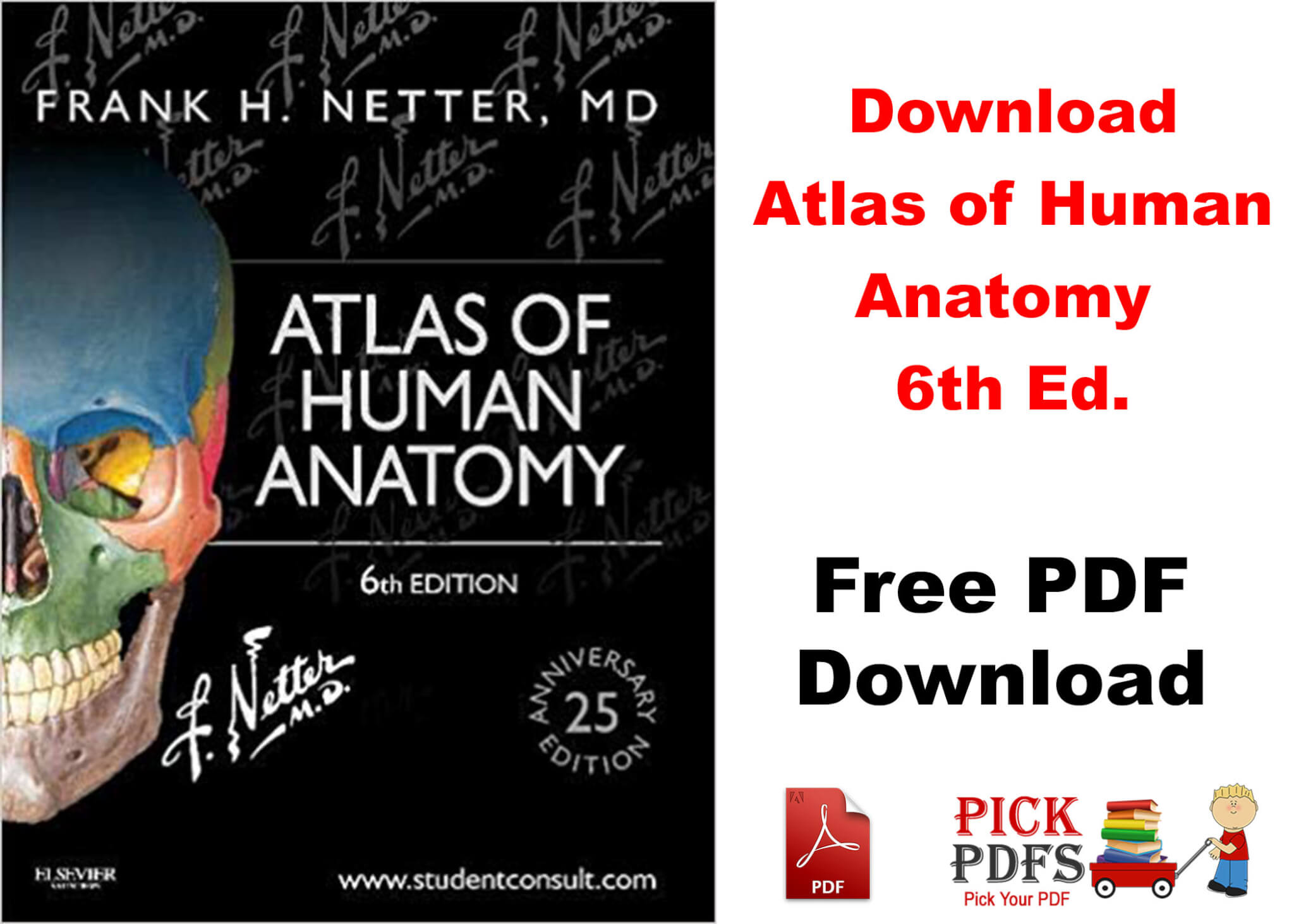 netter atlas of human anatomy 6th pdf free download