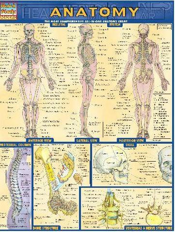https://pickpdfs.com/barcharts-quickstudy-anatomy-volume-1-pdf/