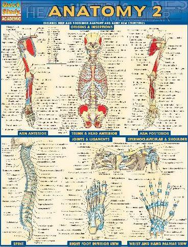 https://pickpdfs.com/barcharts-quickstudy-anatomy-volume-2-pdf-download/