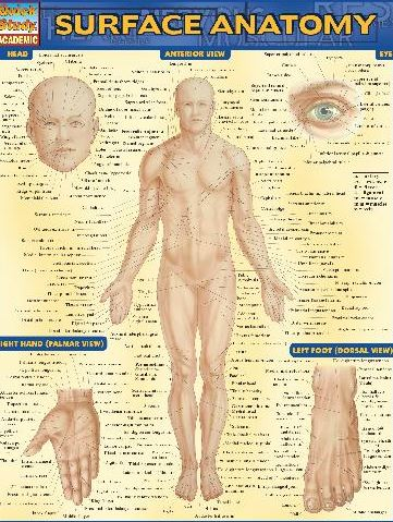 https://pickpdfs.com/barcharts-quickstudy-surface-anatomy-pdf-free-pdf-epub-medical-books/