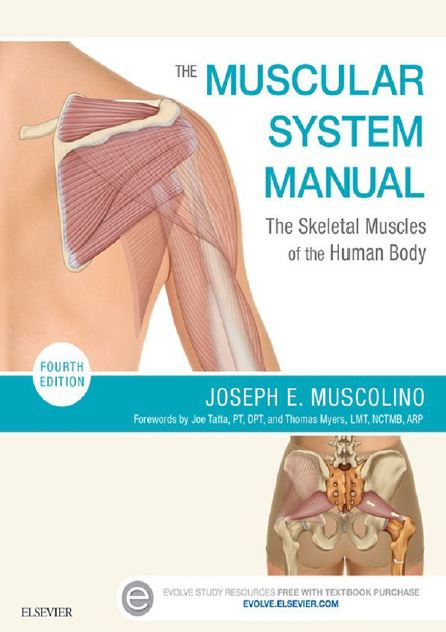 https://pickpdfs.com/the-muscular-system-manual-4th-edition-pdf-free-pdf-pickpdfs-medical-books/